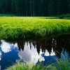 Clouds forests grass green landscapes HD wallpaper