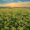 California monument plain wildflowers HD wallpaper