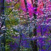 Blooming forest HD wallpaper