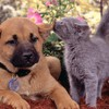 Animals cats dogs secret HD wallpaper