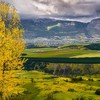Trees cityscapes yellow forests gray fields patagonia HD wallpaper
