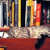 Tired to read HD wallpaper
