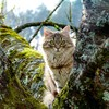 Animals cats feline kittens nature HD wallpaper