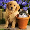 Flowers puppies kittens HD wallpaper