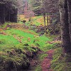 Landscapes trees forest ireland europe moss HD wallpaper