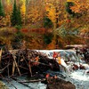 Beaver dam in an autumn canadian forest HD wallpaper