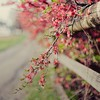 Flora blurred background bokeh branches fences HD wallpaper