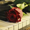 Rose on the piano HD wallpaper