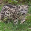 Animaux oursons gepard  HD wallpaper
