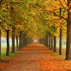 Autumn way HD wallpaper