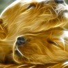 Fractalius dogs artwork HD wallpaper