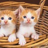 Two cats in basket HD wallpaper