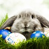 Bunny cute HD wallpaper