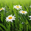 Flowers grass flora HD wallpaper