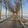 Winter tree lined road HD wallpaper