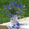 Still life in blue color HD wallpaper