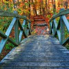 Green trees autumn wood bridges hdr photography colors HD wallpaper