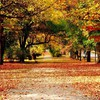 Autumn nature roads HD wallpaper