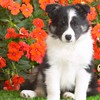 Animals dogs flowers nature puppies HD wallpaper