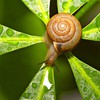 Depth of field macro molluscs nature snails HD wallpaper