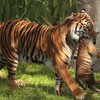 Animals tigers baby motherhood HD wallpaper