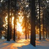 Forests nature snow sunlight trees HD wallpaper