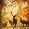 Animals deer leonid afremov antelope reindeer antlers HD wallpaper