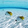 Ocean fish seascapes HD wallpaper