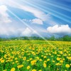 Spring nature HD wallpaper