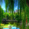 Willows in einem Stadtpark hdr  HD wallpaper
