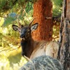 Animals antelope forests nature trees HD wallpaper