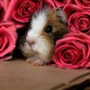 Hidden rodent HD wallpaper
