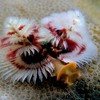 Tree worms animals nature HD wallpaper