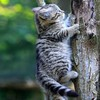 Kitten climbing a tree HD wallpaper