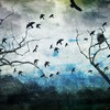 Abstract birds simplistic HD wallpaper