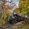 Trains arbres  HD wallpaper
