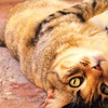 Animals cats eyes fat HD wallpaper
