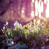 Forests ground macro nature plants HD wallpaper