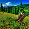 Hdr photography forests grass meadows HD wallpaper