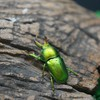 Insects beetles macro HD wallpaper