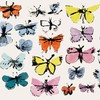 Andy warhol incase butterflies HD wallpaper