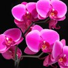 Flowers orchids HD wallpaper