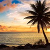 Sunset nature palm trees seascapes HD wallpaper