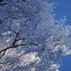 Ice blue winter snow trees frost branches skies HD wallpaper