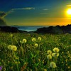 Fields meadows nature spring HD wallpaper