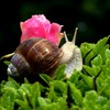 Animals macro molluscs snails HD wallpaper
