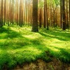 Nature trees HD wallpaper