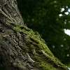 Bark depth of field macro moss nature HD wallpaper