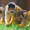 Nature animals monkeys HD wallpaper