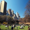 Central park landscapes nature HD wallpaper